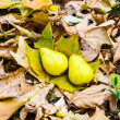 On autumn leaves — Stock Photo #27670139