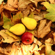 On autumn leaves — Stock Photo #27670461