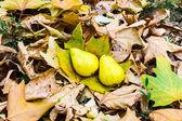 On autumn leaves — Stock Photo