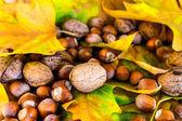 Autumn ground — Stock Photo