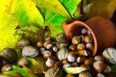 Autumn detail — Stock Photo
