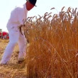 Vídeo Stock: Farmer cutting wheat