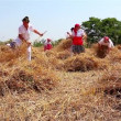Vídeo de stock: Farmer cutting wheat