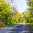 Road through fall forest. — Stock Photo