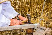 鎌の研ぎ — ストック写真