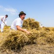 Stock Photo: Farmer gather wheat