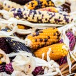 Few cobs of colorful corn in basket — Stock Photo