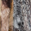 Fur coats — Stock Photo #37678829