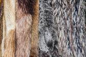 Kürklü mantolar — Stok fotoğraf