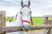 Horse in pen — Foto Stock