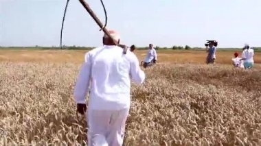 Farmer cutting wheat with scythe — Stock Video