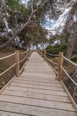Chemin de la plage à la plage de salinas à ibiza baléares — Photo