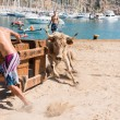 "Stock Photo: ""Bous lmar"" Javea, Spain 2013"