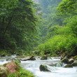 Rivulet in forest in ZhangjiaJie national park — Stock Photo #12075623
