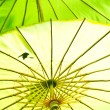 Chinese umbrella — Stock fotografie #12388523