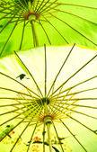 Chinese umbrella — Stock Photo