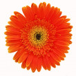 Stock Photo: Orange flower close-up