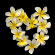 FrANGIPANI — Stock Photo #15078999
