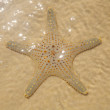 Starfish — Stock Photo #16325061