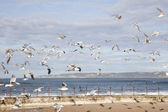 Beach with gulls — Stock Photo