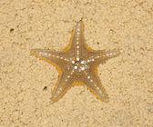 Starfish in soft sand — Stock Photo
