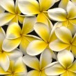 Stock Photo: Frangipani high resolution