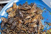 Crickets asian market foods — Stock Photo