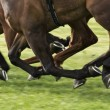 Horse race — Stock Photo