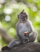 Serene monkey — Stock Photo