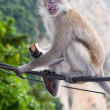 Cheeky monkey — Stock Photo