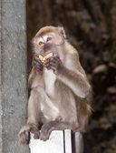 调皮的猴子 — 图库照片