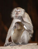 Thiniking monkey — Stock Photo