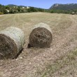Hay harvest in italy — Stock Photo