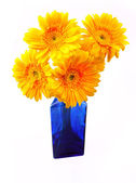 Gerbera in vase — Stock Photo