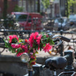 Stock Photo: Flowers in Amsterdam