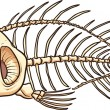 fish skeleton — Stock Vector