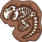 Dinosaur fossil — Stock Vector #26092603