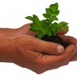 Plant in hands — Stock Photo