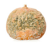 Rotting pumpkin — Stock Photo