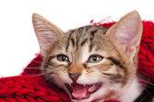 Petit chaton — Photo