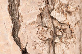 Bark of a trunk — Stock Photo