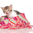 Little kitten — Stockfoto #25253537
