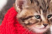 Sick kitten — Stock Photo