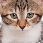 chaton mignon — Photo