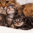 Stock Photo: Cat with kittens