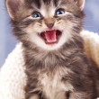 Foto de Stock  : Cute kitten