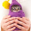 Stock Photo: Cute kitten