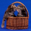 Stock Photo: Cute kittens