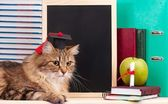 Scientific cat — Стоковое фото
