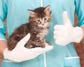 Veterinary survey — Stock Photo